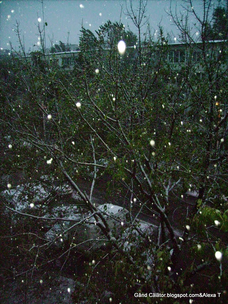 Shining brightly like flashes of light.. snowflakes falling in fall?!...lol :)