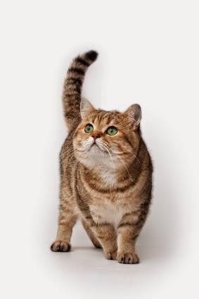 Mon chat vieillit Véto Malin