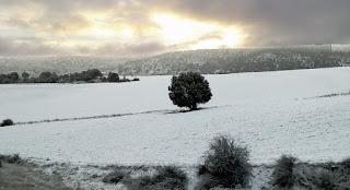 Teroleja - Sabina nevada