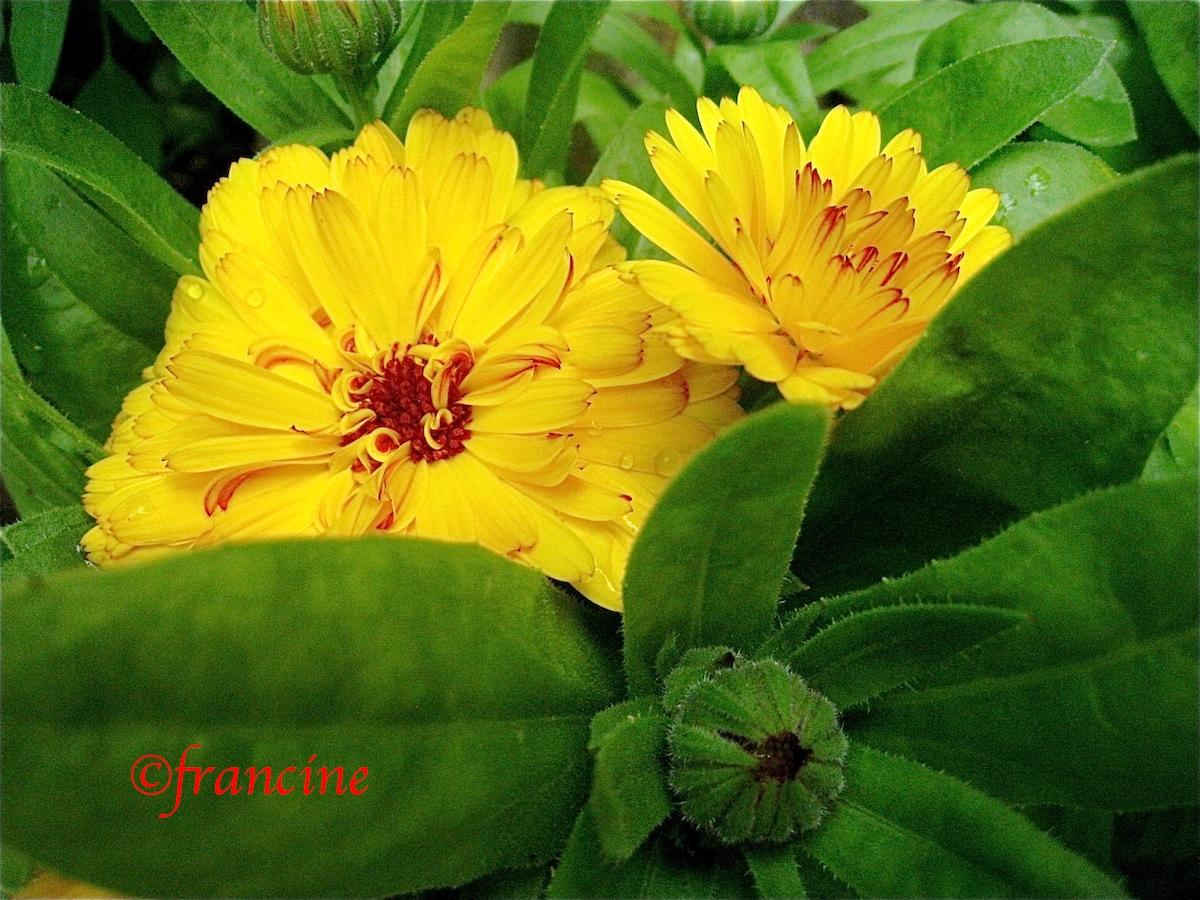 Balade autour des fleurs dans un jardin en ville for Un jardin de fleurs
