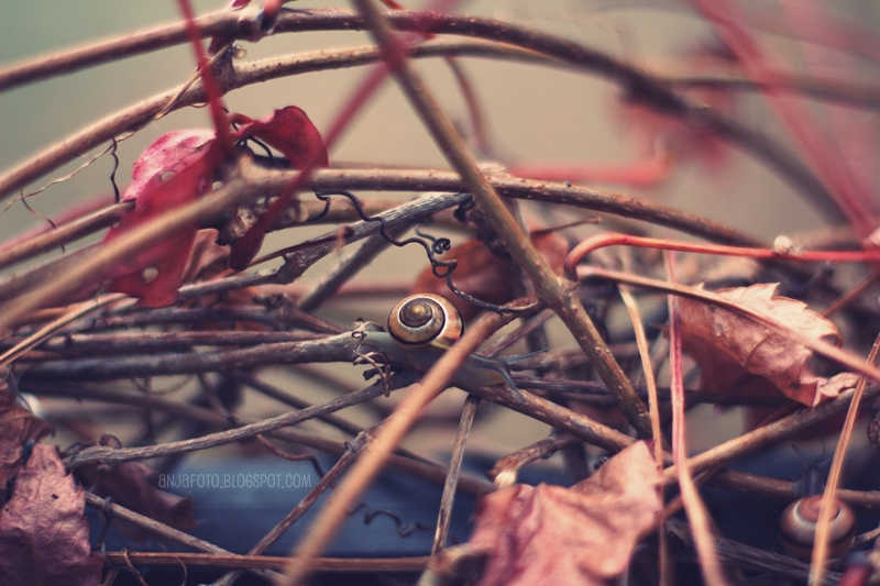 ślimak, ślimaki, anjafotografia