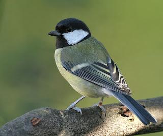 %D8%B7%D9%8A%D9%88%D8%B115 صور رمانسية طبيعية لأجمل الطيور 2014