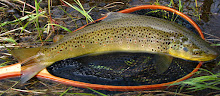East Branch Brown