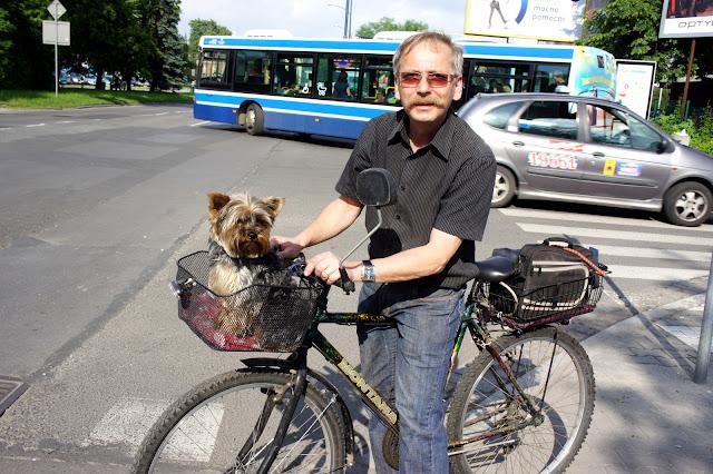 pies na rowerze, koszyk na psa