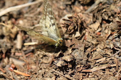 Unknown Butterfly Stops for a Moment