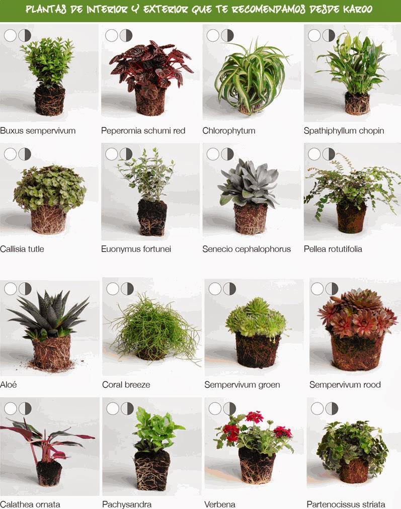 plantas jardin vertical