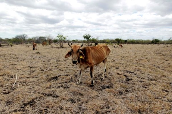 Nearly 3 million effected with almost 1 million at risk of malnutrition after years of drought...