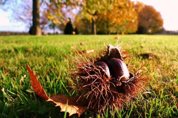 Famille egger comment faire les marrons chauds - Comment faire des chataignes ...