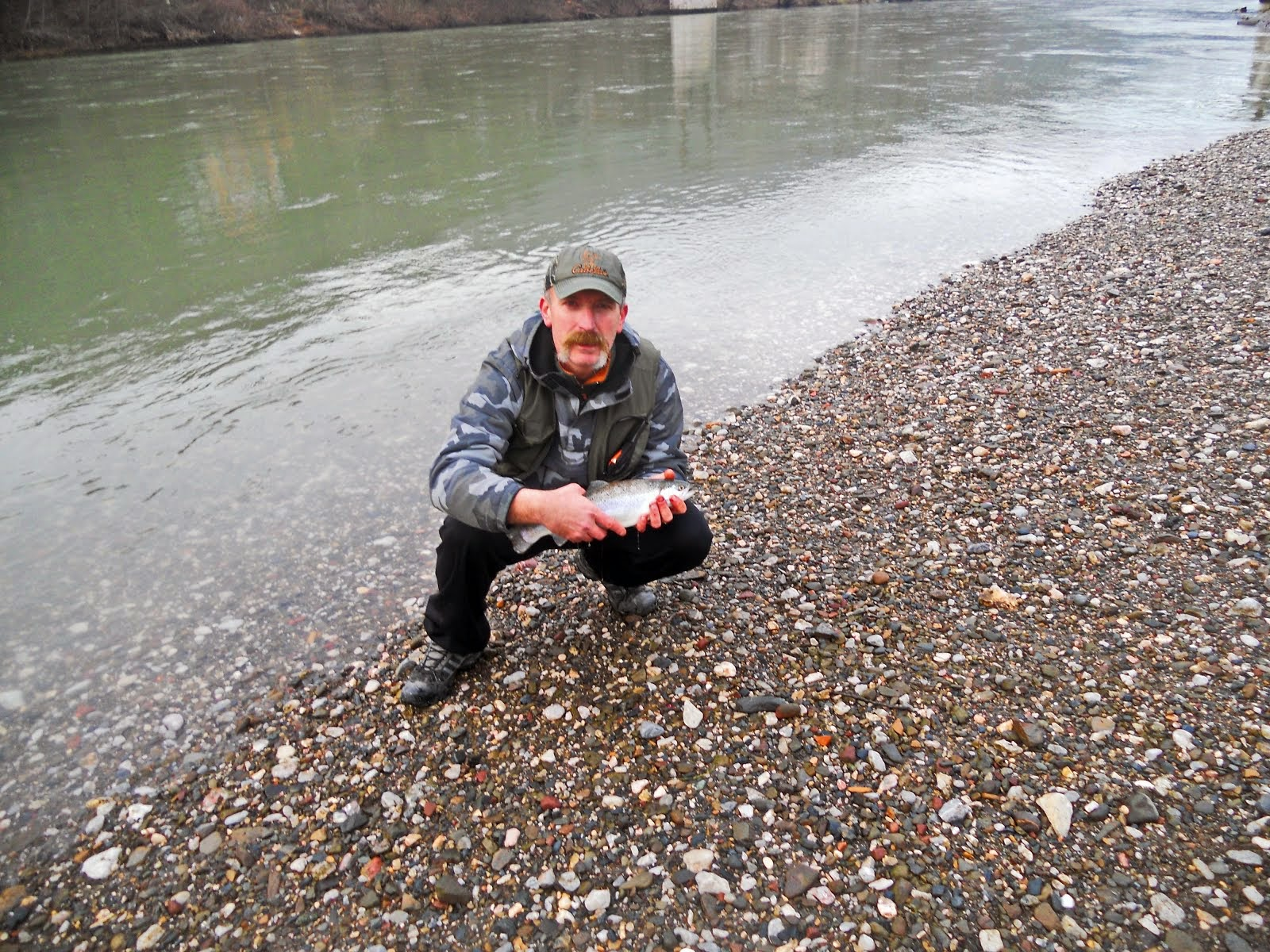 Trout from Drina