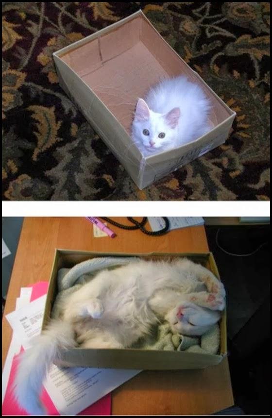 imagens de gatos novinho e depois mais velhos