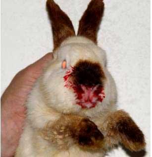 enfermedades más comunes en el conejo