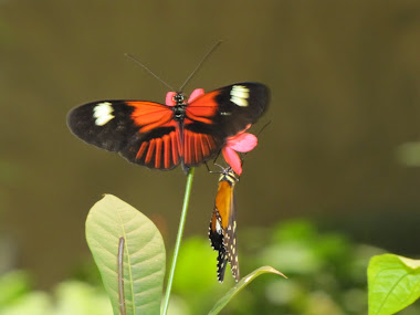 Bright Orange, White, and Black Butterfly