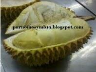 Cara Memilih Durian Paling Jos Dan Memuaskan