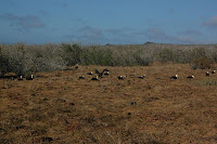 Waved Albatross Mating Area on Espanola Island Punta Suarez Galapagos
