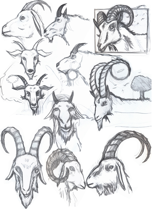 Sketch Every day: Sketch Dump Day! Now with more goats! Goat Face Side Drawing