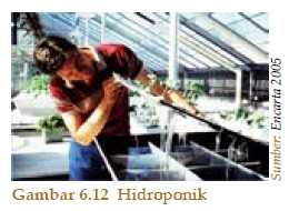 Hidroponik dan Aeroponik