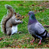 Most Amazing Friendly Squirrels Cool Image Gallery