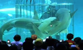 EvanRachmad: Sea World Indonesia