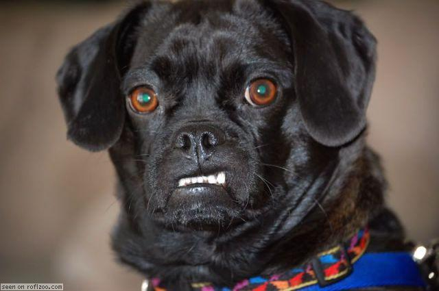 http://2.bp.blogspot.com/-nAh5IHJKWTI/TlxDv7BMe6I/AAAAAAAACt4/FRkTHi_4WWw/s1600/angry-dog-big.jpg