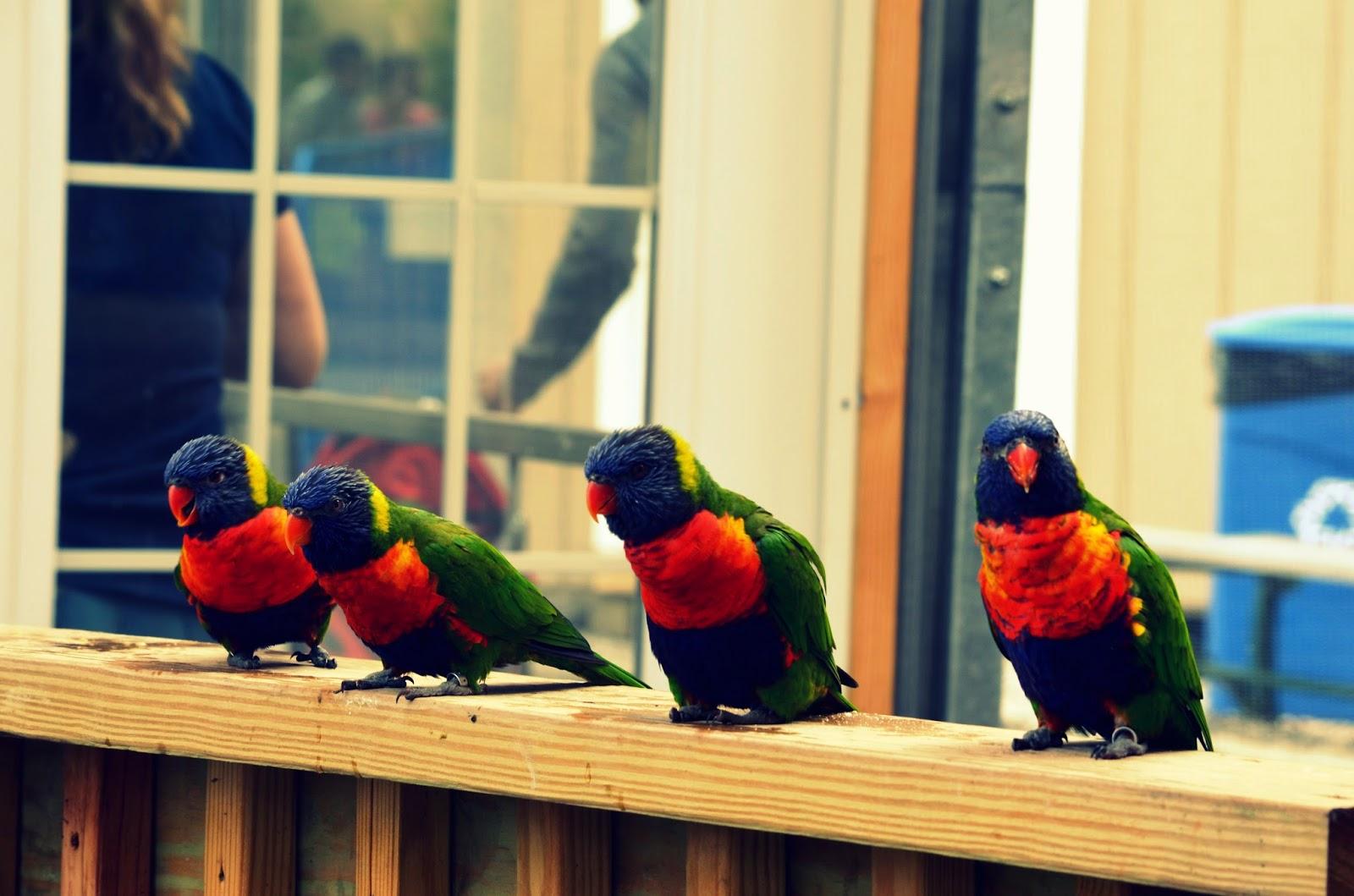 CT aquarium birds