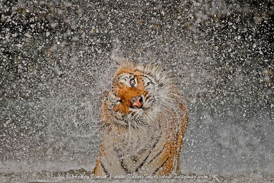 14. 2012 Nat Geo Recognition by Ashley Vincent