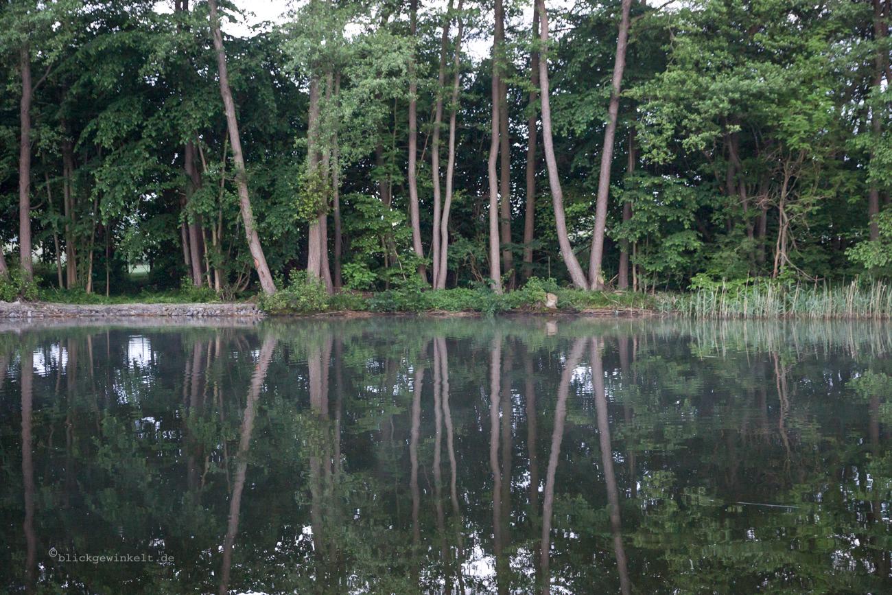Wilde Natur am Fluss