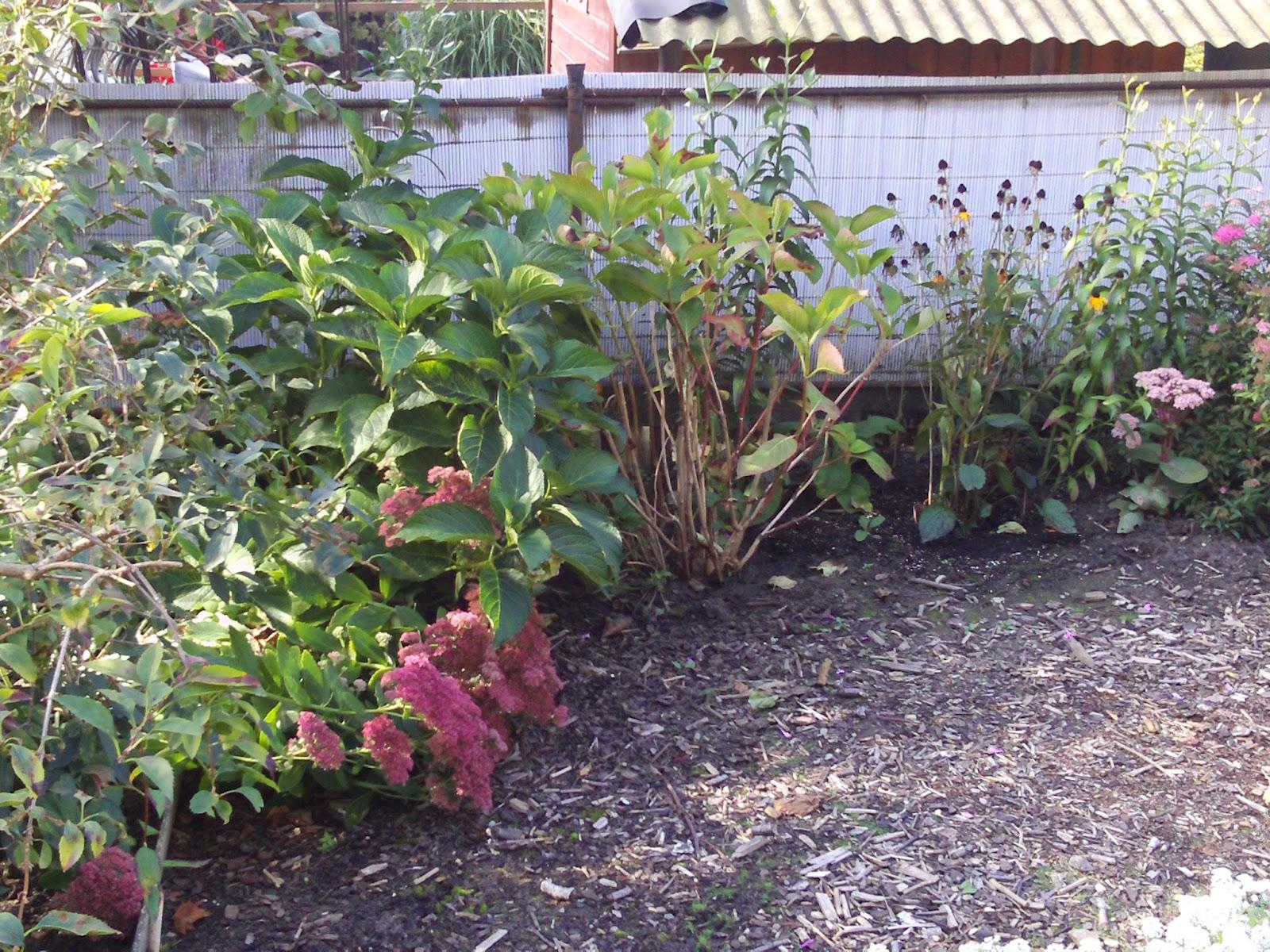 Gartengestaltung verkleidung einer wand 3 gartenelfe for Gartengestaltung wand