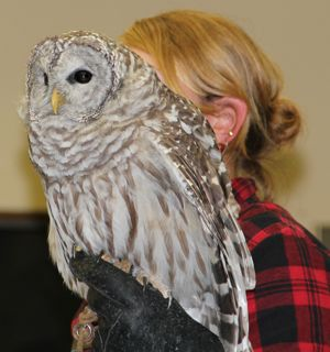 photo of barred owl and handler at Audubon Center of the North Woods