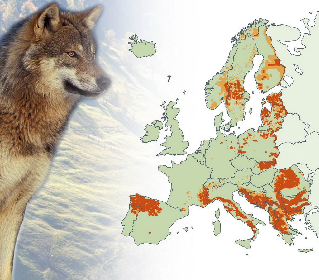 Wolf population in Europe Union