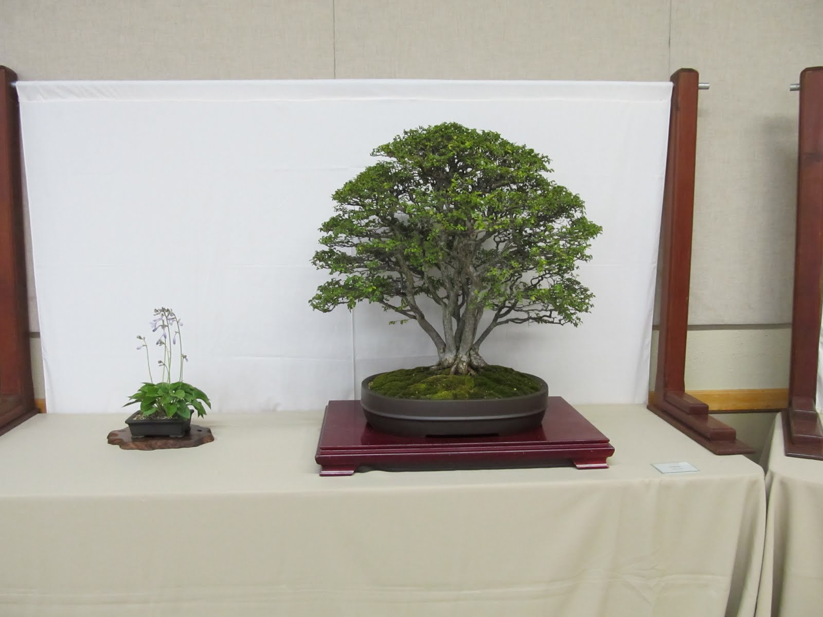 Bonsaibp39s Bonsai Blog 06 01 2011 07 01 2011