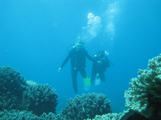 Diving Bali Tours Packages