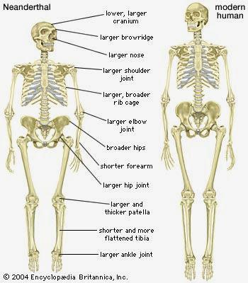 En que nos parecemos los humanos a los neandertales