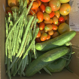 Latest Vegetable Harvest Donation