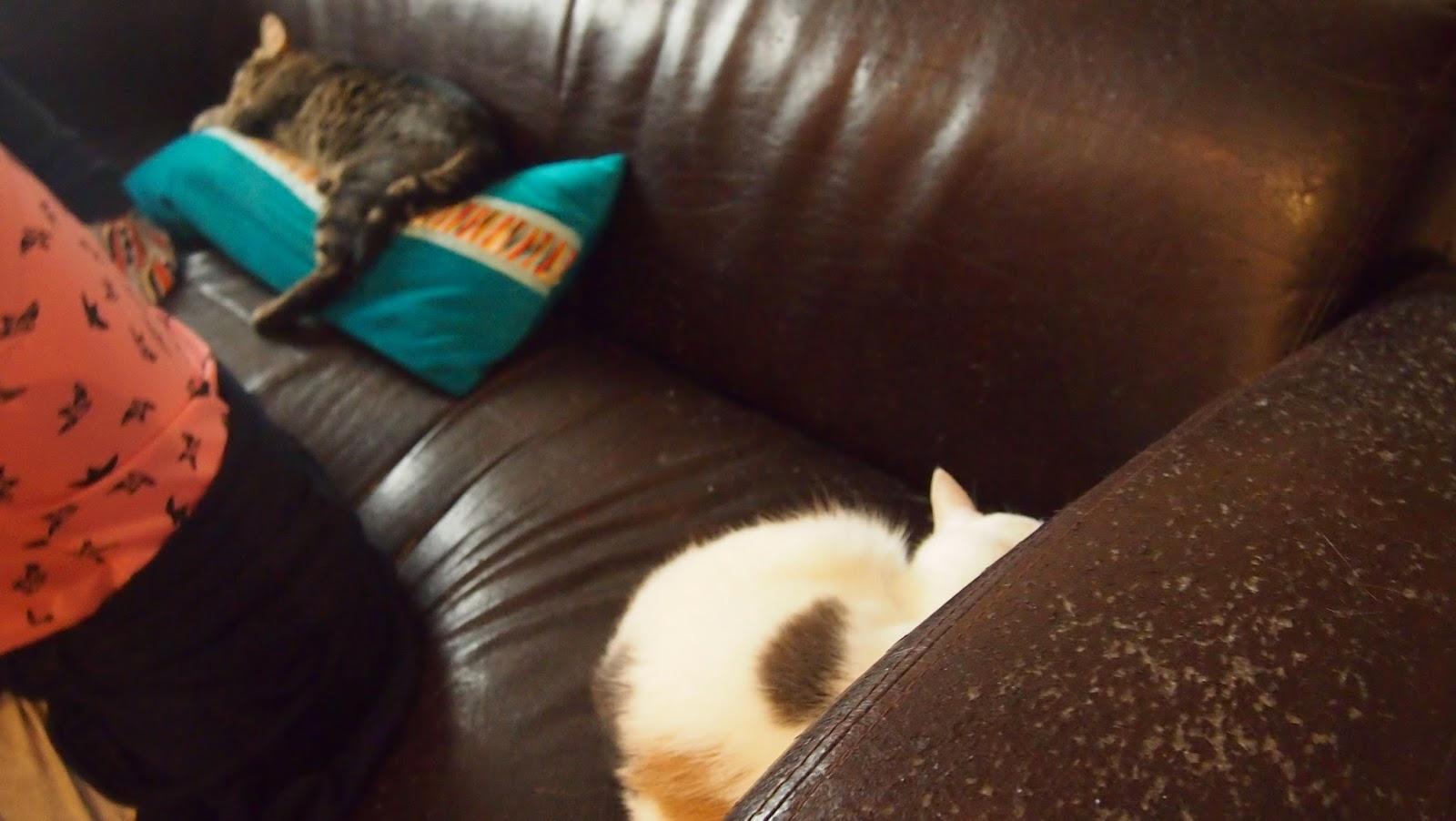 パリ猫カフェの猫の写真その1
