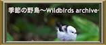 季節の野鳥~Wildbirds archive~