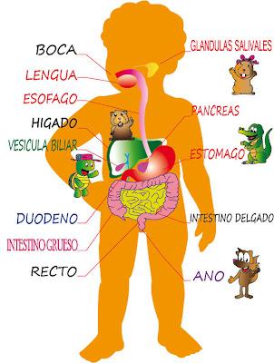 El blog de Celia: Proceso de la digestión