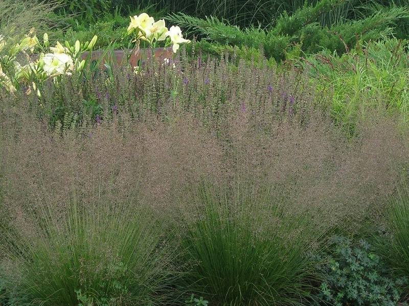 Gardener in a forest hot trend in residential landscapes for Short growing ornamental grasses
