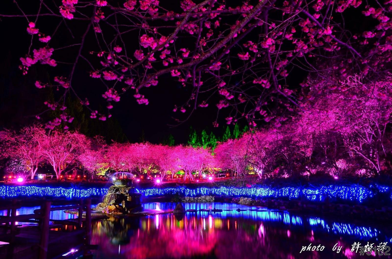 Cherry Blossom Lake Sakura Japan Amazing Views