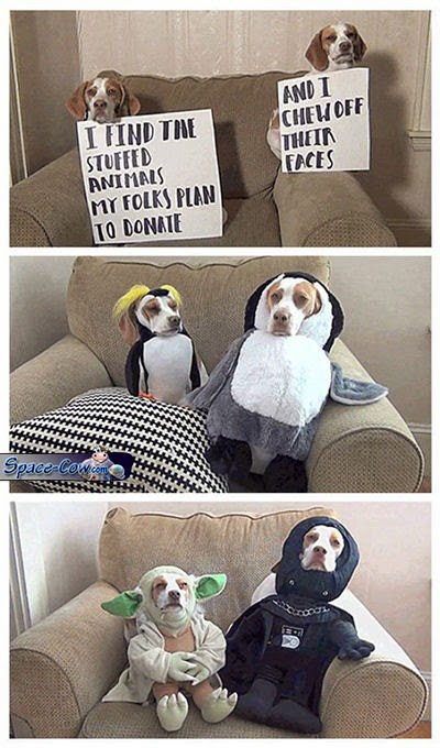 funny dogs toys pics