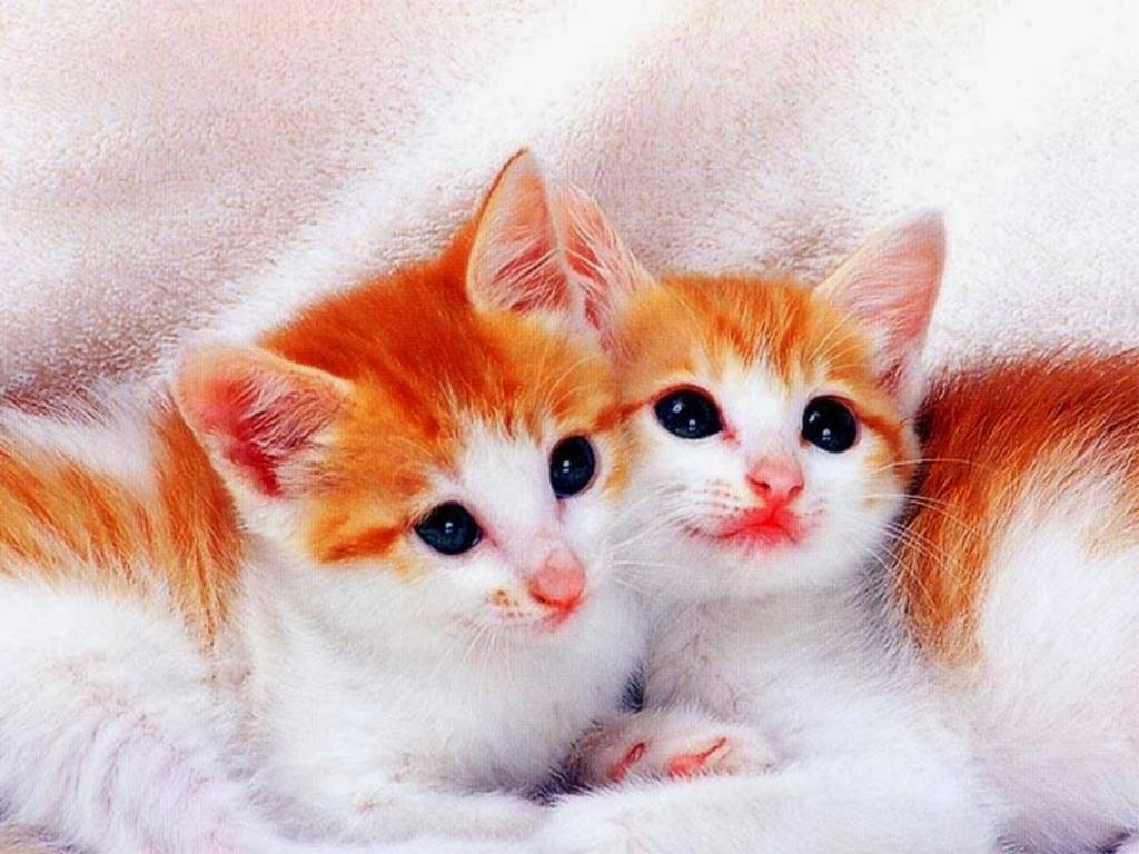 Cats Wallpapers Download for Free