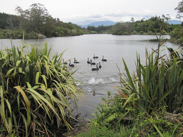 lake-mangamahoe