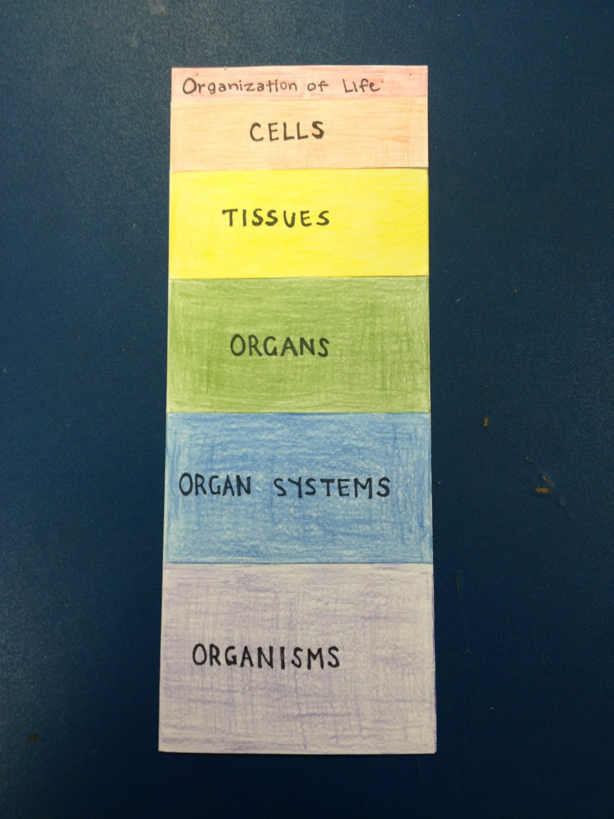 Monday March 11 2013 & Cards and Cardigans: Organization of Life Foldable