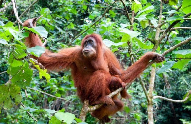 satwa yang dilindungi di indonesia