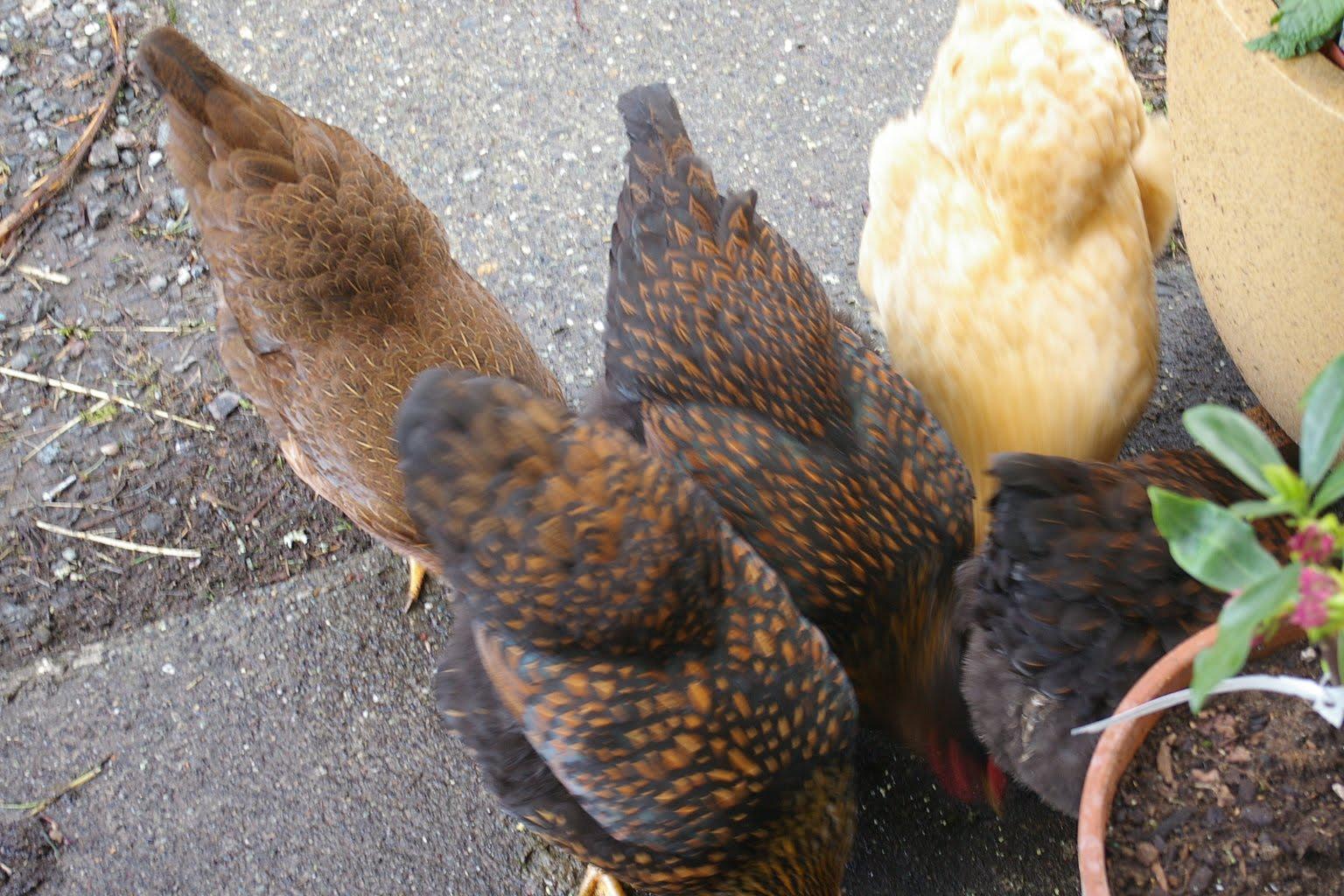 Chicks Shoe Store Mercer Island