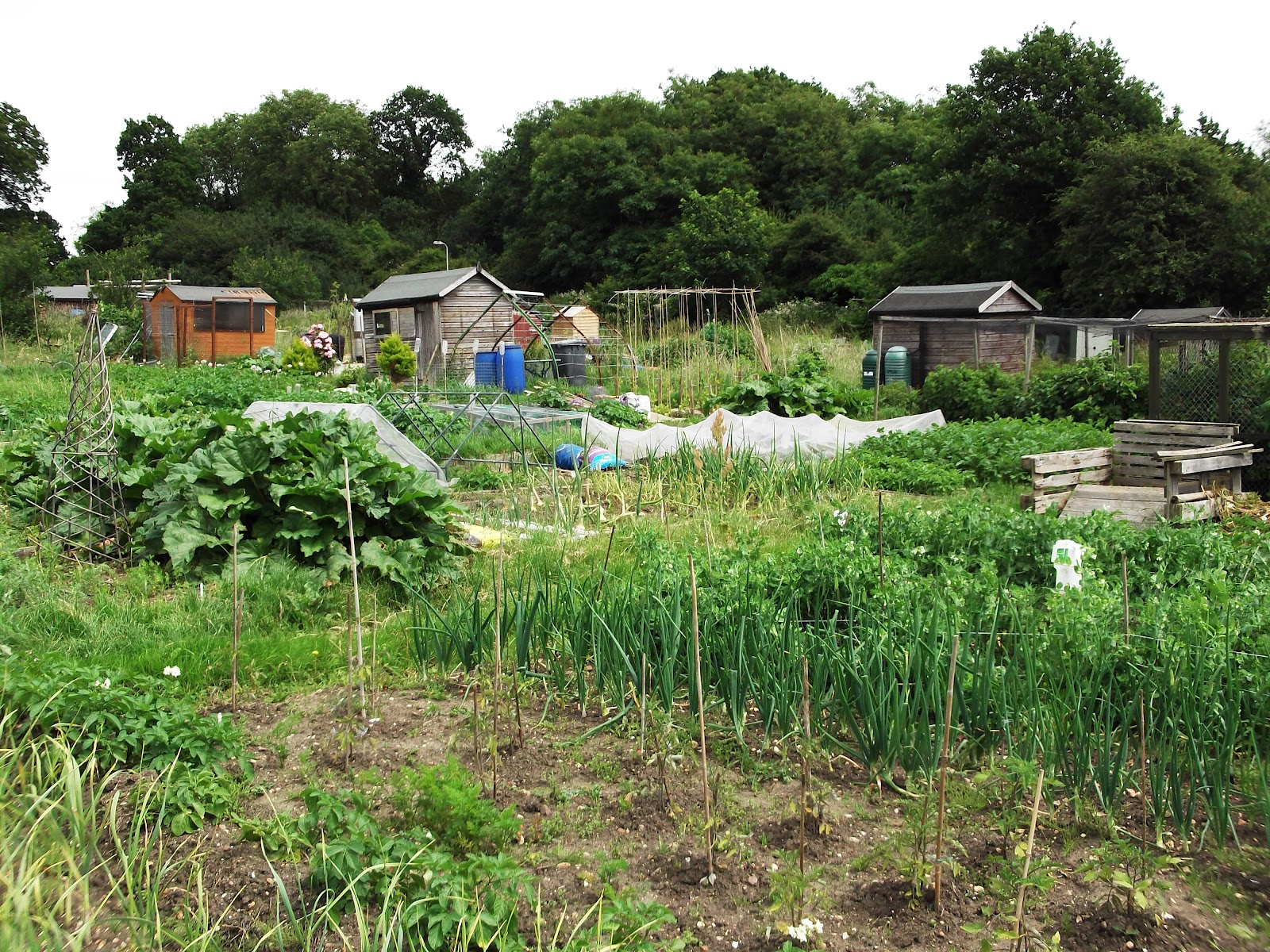 Urban Pollinators Allotments Can Be Great Places For Wildlife