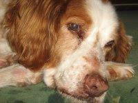 Per chi trova i cani anziani irresistibilmente teneri