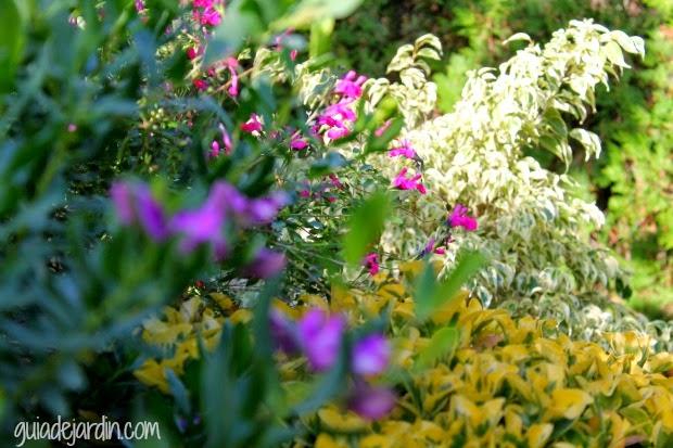Combinación de plantas en el jardín