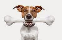 como quitar mal aliento a mi perro