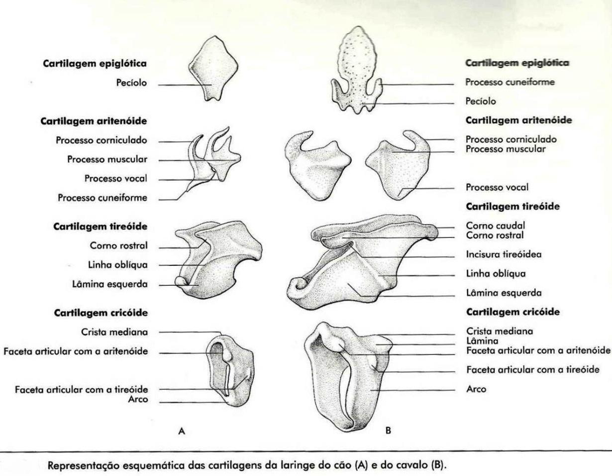 Anatomia Veterinária II - UFV 2012: Aparelho Respiratório