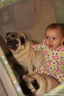 funny_picture_baby_with_dog
